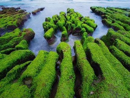 富貴角公園 - 老梅迷宮、老梅綠石槽