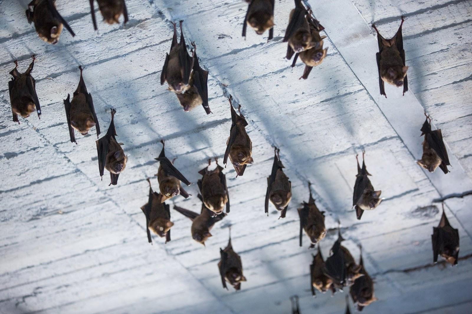 Bat遠足農場